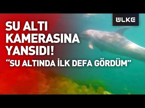 İstanbul'da dalgıca yunus balığı sürprizi!