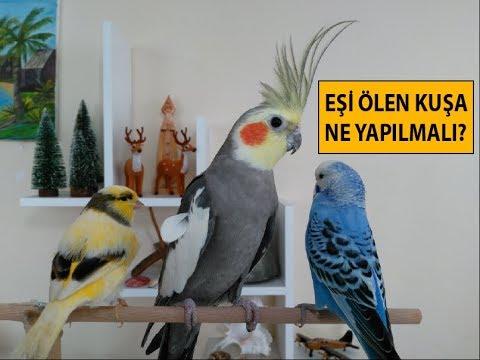Kuşun eşi ölürse neler yapılmalı