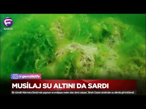 Musilaj su altını da sardı