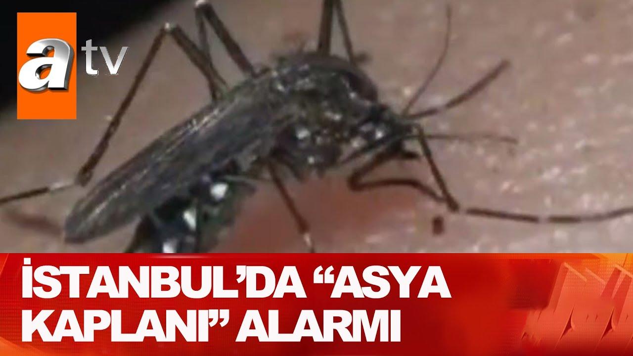 Sivrisinek sayısı neden artıyor?