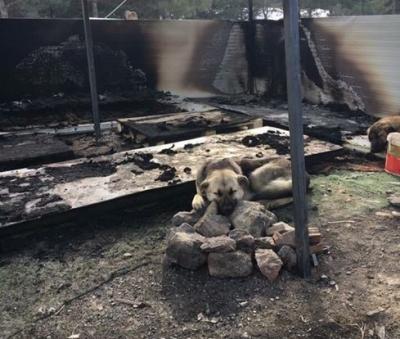 Ankara'da köpek evi yakıldı, iki yavru köpek yanarak öldü!