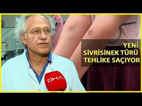 İstanbul'daki Tehlike Asya Kaplan Sivrisineği!