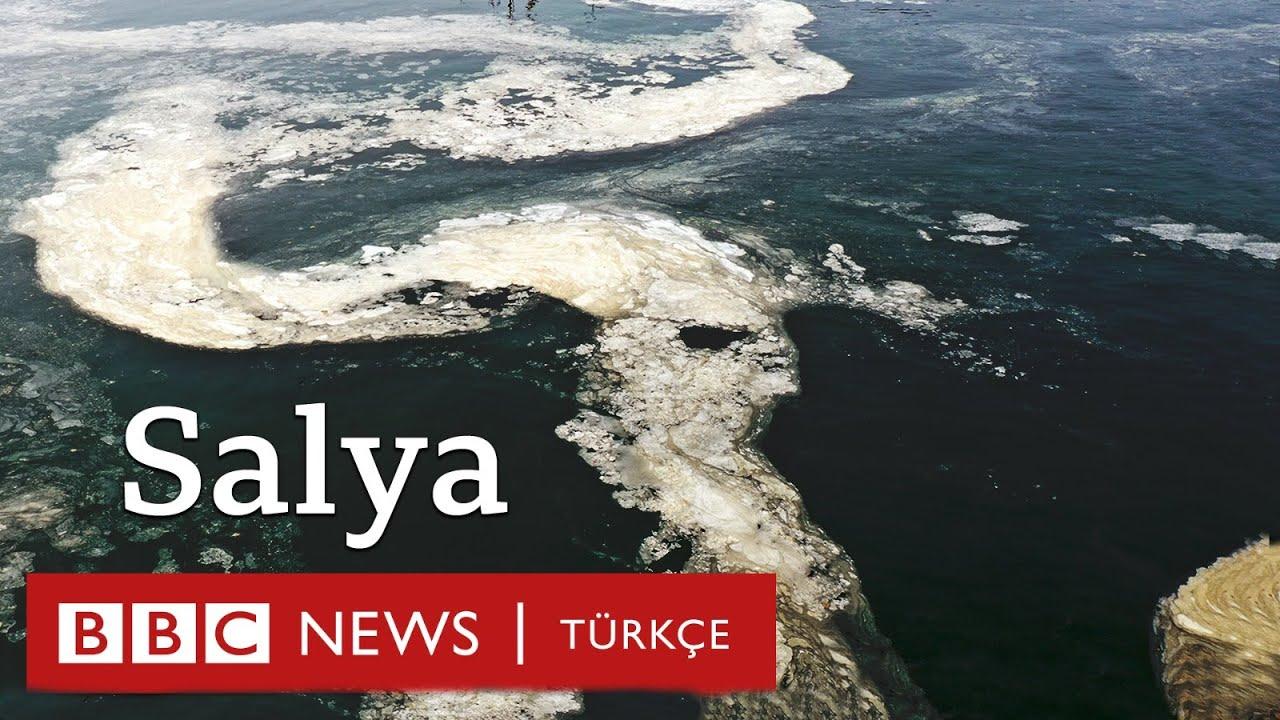 Marmara Denizi'nde salya: