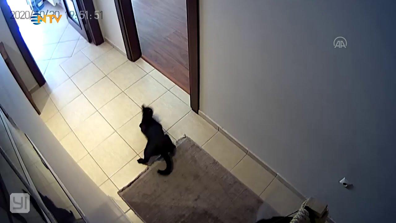 İzmir depreminde kedinin yaşadığı panik kameralara yansıdı