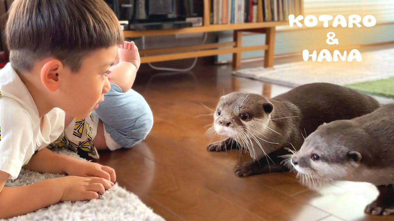 はじめて人間の赤ちゃんを見たカワウソのリアクションが面白い Otters Meet Baby For The First Time